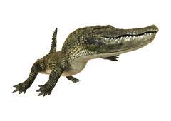 American Alligator - stock illustration