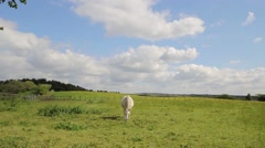 Horses in the fields of Scotland, HD footage - stock footage
