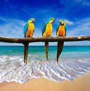 Tropical vacation concept - three parrots (Blue-and-Yellow Macaw (Ara araraun Stock Photos