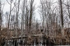 Creepy Barren Swamp Forest Stock Photos