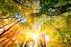 Stock Photo of Sun shining through summer, autumn trees and colorful leaves.