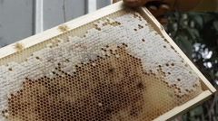 Beekeeper apiarist and honey production bee hive - stock footage