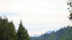 Birds Flying At Dusk/Evening in the Forest, Mountain Backdrop. Stock Footage