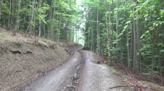 Beech forest road Stock Footage