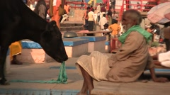 The cow crowned of the ghats of Varanassi in India Stock Footage