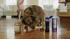 Close up slow motion shot of dog eating peanut butter on floor / Cedar Hills, Stock Footage