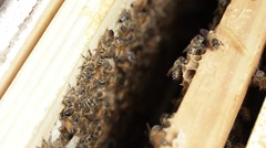 Beekeeper apiarist and honey production bee hive Stock Footage
