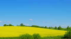 Canola field, panorama Stock Footage