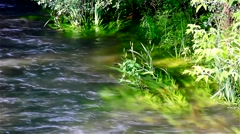 River Grass No.1 Stock Footage