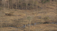 AERIAL United States-Trees And Marshes Stock Footage