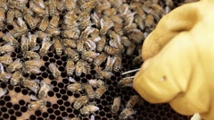 Honey bee hive pests and diseases Stock Footage