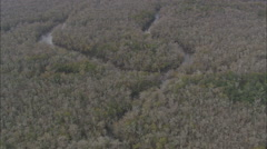 AERIAL United States-Flight Past Creek In Forest Swamp Stock Footage