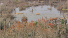 AERIAL United States-Colours In The Okefenokee Swamp Stock Footage