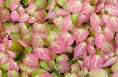 Colorfull plants - stock photo