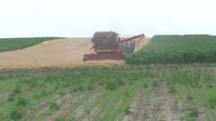 Harvester reaps wheat FUll HD Stock Footage
