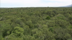 AERIAL South Africa-Fast Flight Across Forest In The Tsitsikamma National Park - stock footage