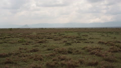 African savannah, dry drought, pan left, Kenya, Samburu Stock Footage