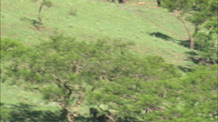 AERIAL South Africa-Fast Flight With Wildebeest Stock Footage