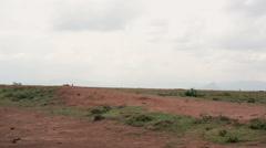 Wild Zebras next to savannah waterhole, Samburu, Kenya, Africa safari Stock Footage