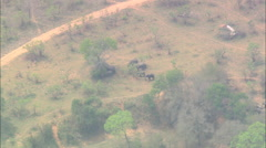 AERIAL South Africa-Elephant Herd In The Kruger National Park Stock Footage
