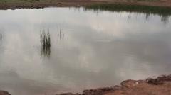 Waterhole in dry savannah, Samburu, Kenya, Africa, tilt up Stock Footage