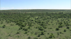 AERIAL South Africa-Open Veld And Cattle Stock Footage