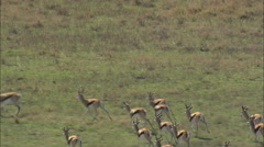 AERIAL South Africa-Springbok, Impala, Wildebeest And Blesbok Stock Footage