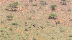 AERIAL South Africa-Sable Antelope Stock Footage