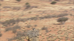 AERIAL South Africa-Sociable Weaver Bird Nest And Eagle Stock Footage