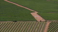 AERIAL South Africa-Vineyards Near Darling - stock footage