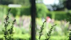 Flower Garden 2 (no grade) Stock Footage