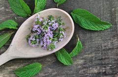 Flowers thyme with leaves mint Stock Photos