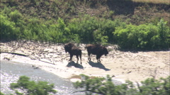 AERIAL United States-Buffalo Grazing By Small River Stock Footage