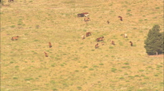 AERIAL United States-Mustangs In Wild Horse Sanctuary Stock Footage