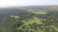 AERIAL United States-Buffalo Grazing In Custer Park Stock Footage