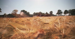 Girl and her horse walking through a sunlit wheat field Stock Footage