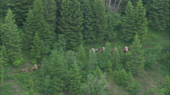 AERIAL United States-Mule Trains Into Glacier National Park - stock footage
