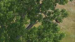 AERIAL United States-Birds On The Missouri River Stock Footage