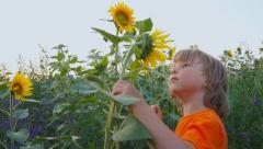 Сhild sniffs sunflower field Stock Footage