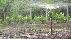 Irrigation Sprinkler Watering Vegetable Garden - stock footage