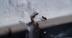 Ant Ants in House and Kitchen Stock Footage