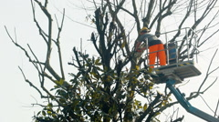 Gardener on a Crane Cutting Tree Branches Stock Footage