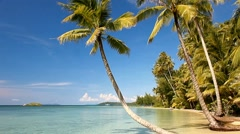 Tropical sea shore with palm trees on the beach - stock footage