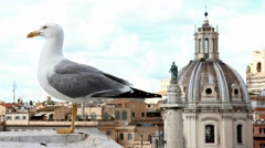Gull on the lookout above center of Rome Stock Footage