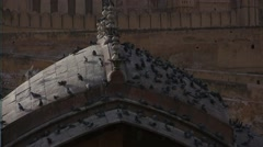 Birds on the roof of strong Amber in India - stock footage