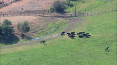 AERIAL United States-Rounding Up Cattle Stock Footage