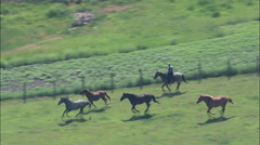 AERIAL United States-Rounding Up Horses Stock Footage