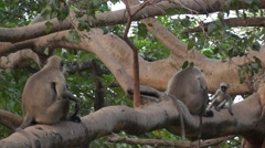 Family of monkey on a tree and have fun Stock Footage