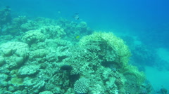 Peaceful Life of a Coral Reef - stock footage