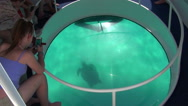 Stock Video Footage of Watching turtle through glass bottom in boat